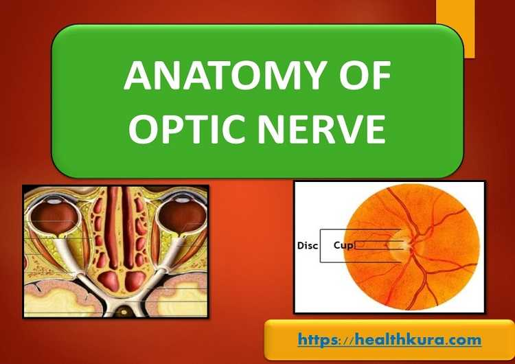 anatomy-of-optic-nerve-visual-pathway