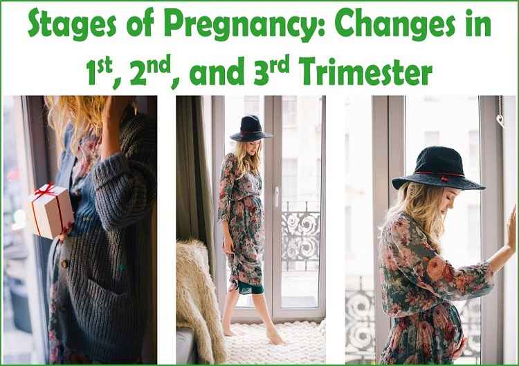stages-of-pregnancy-trimester