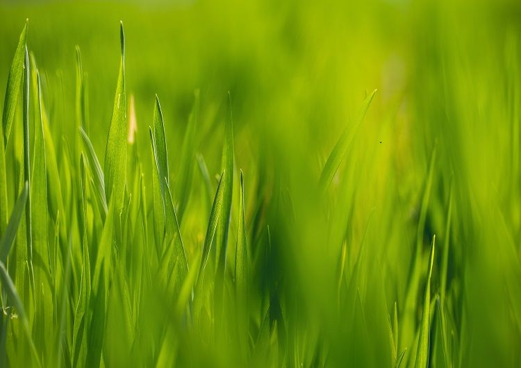 health-benefits-of-wheatgrass-nutrition-facts